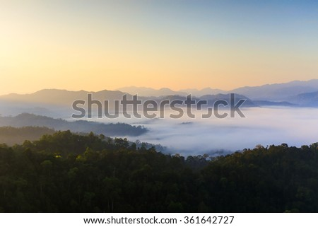 Sunrise in the morning fog. Tropical rainforest.