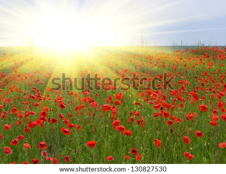 Sunrise in the poppies field - stock photo