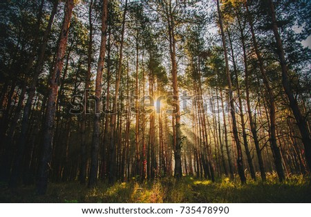 sunrise inside the forest in an autumn day