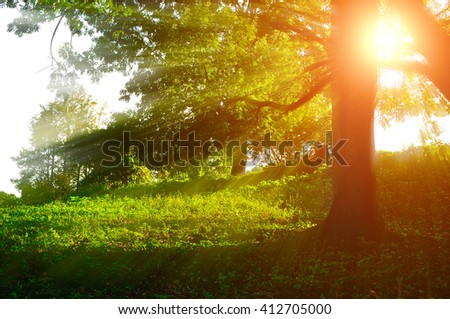 Sunrise landscape in the forest with bright sunbeams breaking through the tree branches. Summer forest  landscape - stock photo