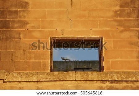 Sunrise light and pigeon resting on a wall
