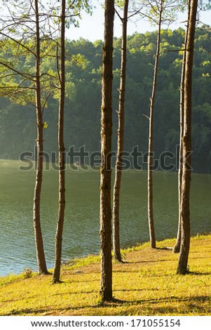 Sunrise light at Pang-ung, pine forest park in north thailand