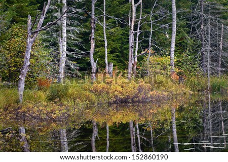 Sunrise light on the shoreline of Council Lake in Hiawatha National Forest, Michigan. - stock photo