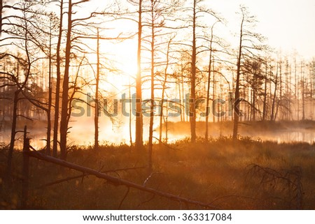 Sunrise near forest lake in cold foggy morning - stock photo