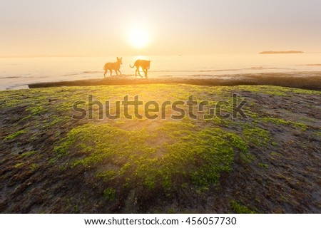 Sunrise of sea and dog running on the beach with sea weed and soft flare filter