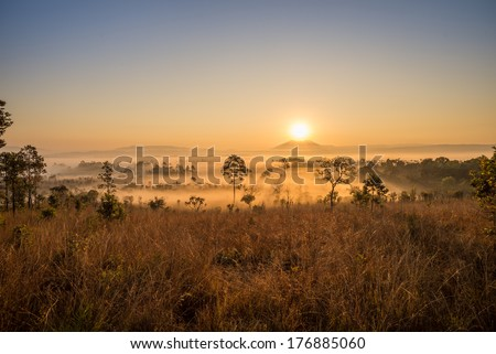 sunrise on foreground of savanna with fog. - stock photo