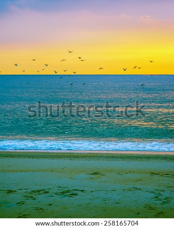 Sunrise on Sandy Hook Beach, New Jersey, USA. Scenic view over Atlantic ocean, colorful sky, horizon and running waves, peaceful, lovely, dramatic. Many birds flying on sky. Instagram filtered look. - stock photo