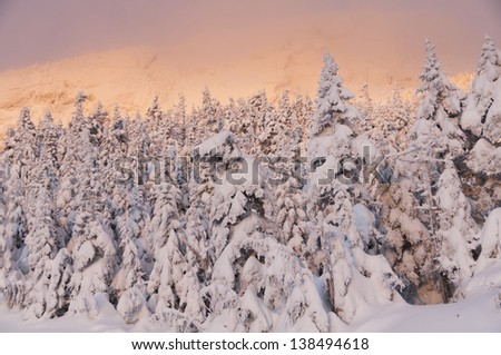 Sunrise on snow covered trees on Mt. Mansfield, Stowe, Vermont.