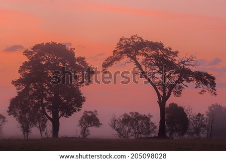 sunrise on the African savannah - stock photo