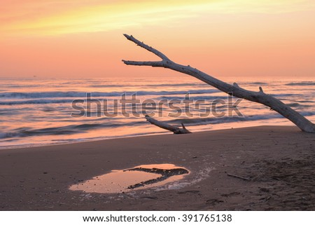 Sunrise on the beach, colored sky, driftwood