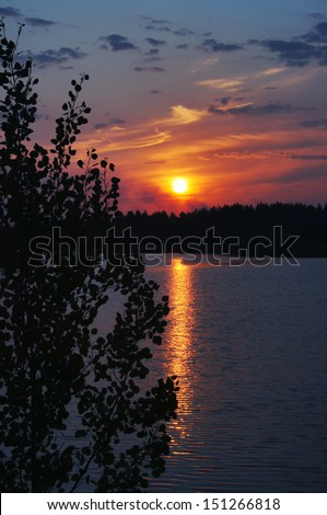 Sunrise on the forest lake with the aspen in the foreground.                      - stock photo