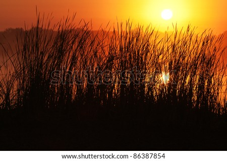 Sunrise on the lake and reed - stock photo