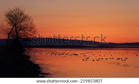 Sunrise over a duck and goose filled wetland in northern California, in the Klamath Basin National Wildlife Refuge, along the Oregon state border.   Duck and goose hunting in the Pacific Flyway