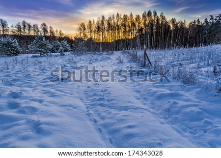 Sunrise over a snow covered forest - stock photo