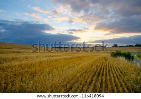 Sunrise over a wheat field - stock photo