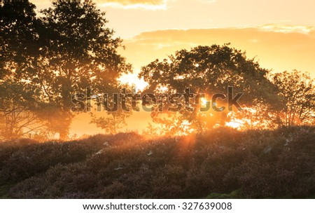 Sunrise over Dutch heath landscape with flowering heather, Drente, the Netherlands.