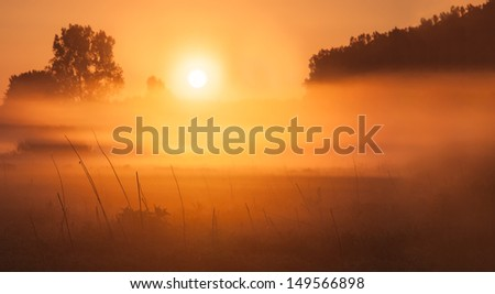 Sunrise over foggy meadow  - stock photo