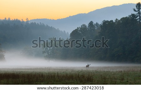Sunrise over misty meadow with male bull elk grazing. - stock photo