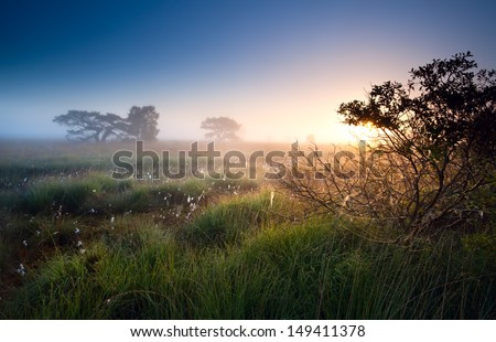 sunrise over swamps with cotton-grass, Fochteloerveen, Netherlands - stock photo