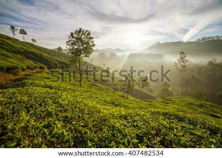 Sunrise over tea plantations in Munnar, Kerala, India - stock photo