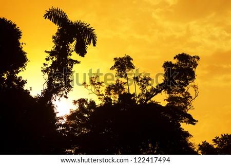 Sunrise over the Amazonian jungle - stock photo