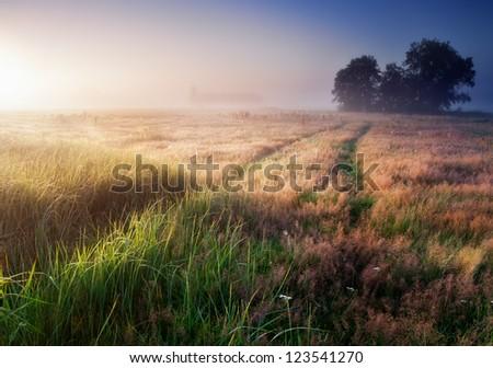 Sunrise over the foggy morning - stock photo