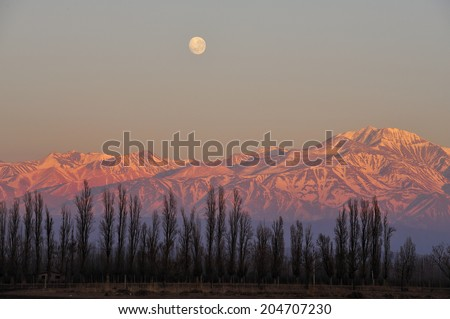 Sunrise over vineyard with snow capped mountains of Andes in Mendoza, the heart of wine making region in Argentina, famous for producing Malbec red wine - stock photo