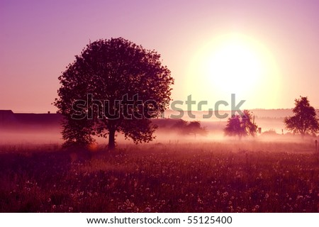 Sunrise. Picture of tree bathed in the rays of the rising sun. - stock photo
