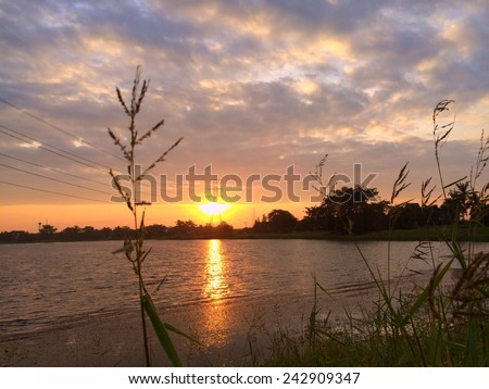 Sunrise scene over lakeside and silhouette  of grass-flower