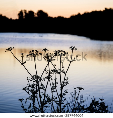 Sunrise silhouette landscape of foliage on lake at sunrise with deliberate shallow depth of field - stock photo