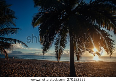 Sunrise sky over sea and palm branch.Tropical beach,Sri Lanka, sand coastline, beautiful landscape, exotic nature, summer vacation, travel and tourism concept - stock photo