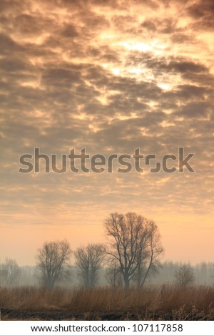 Sunrise sky under the trees