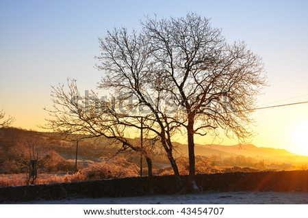 Sunrise sun shining on winter trees after a snow fall - stock photo