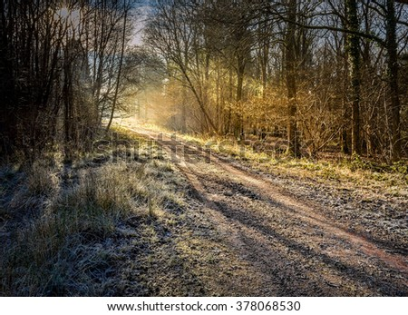 Sunrise winters Morning in the forest - stock photo