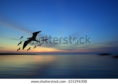 Sunrise with birds flying - stock photo