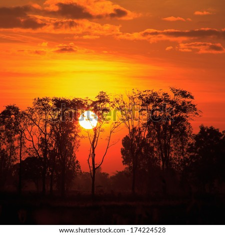 sunrise with dead trees at Thailand - stock photo