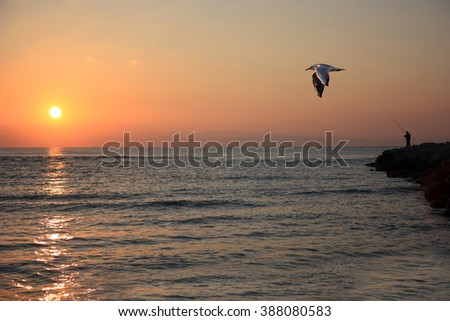 sunrise with flying bird