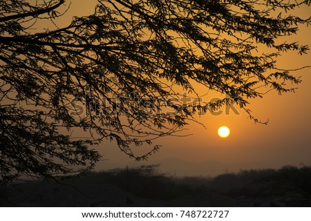 Sunrise with tree silhouette in colorful clear sky