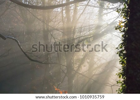 suns rays lighting up the fog through the trees