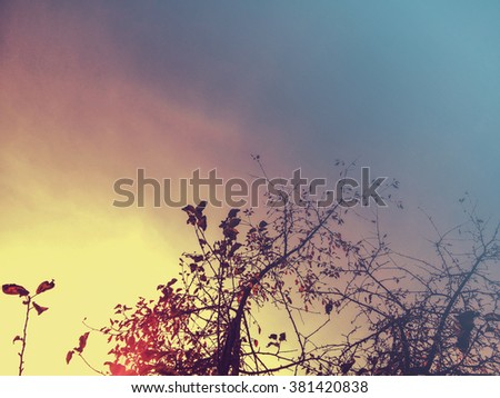Sunset above autumn trees/Sunset above autumn trees/Sunset above autumn trees - stock photo