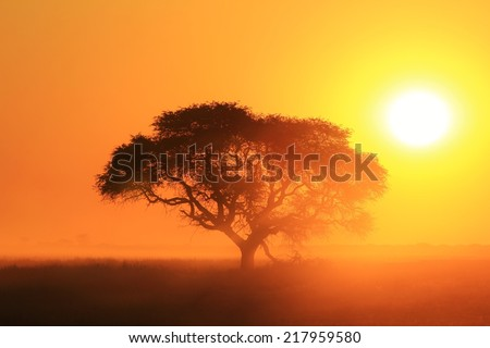 Sunset - African Color Background - Golden Light, Old Tree and Beautiful Nature - stock photo