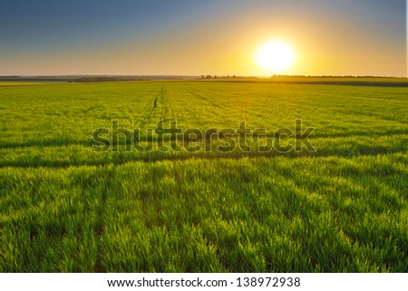 sunset among a green fields - stock photo