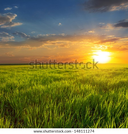 sunset among a green fields - stock photo