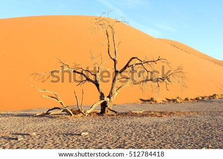 Sunset and a dead tree at Dune 45 in Sossusvlei, Namibia