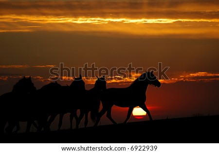 sunset and horses (silhouette)