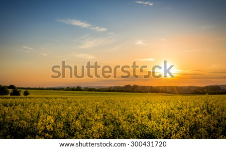 Sunset and idyllic country landscape with field of yellow rapeseed in the foreground