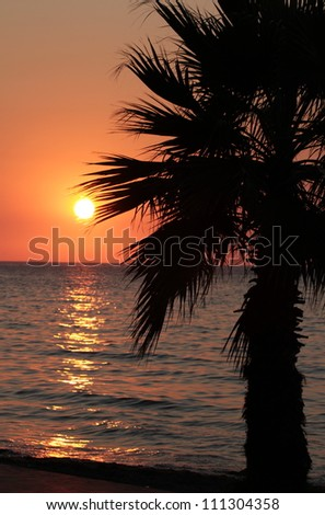 Sunset and palm tree on the beach - stock photo