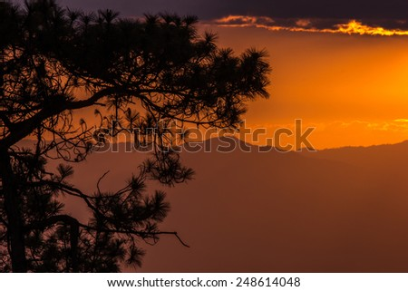 Sunset and saturation color sky.Tree,cloud and mountain in shadow. Pine at foreground in silhouette. - stock photo