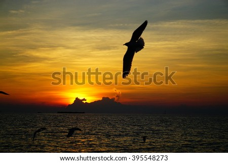 Sunset and seagulls