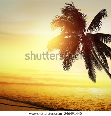 Sunset at a tropical beach in the Caribbean  - stock photo